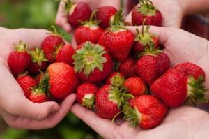 Strawberry-600x398